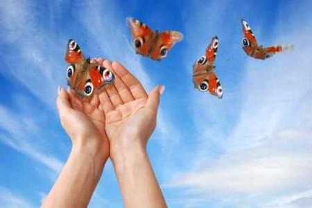 foto-borboleta-Fotos-Gratis---farfalle-5430392